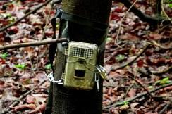 Camera trap, monitoramento.
